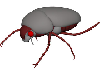 Bug (Meikever In Dutch) 3D Model