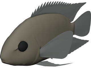 Cichlid 3D Model