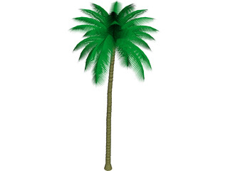 Palm Tree 3D Model 3D Preview