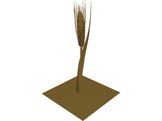 Dried Barley 3D Model