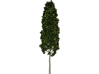Carpinus Betulus Tree 3D Model