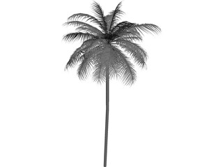 Palm Tree Caribean 3D Model