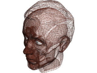 Face Muscles and Head 3D Model