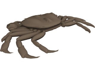 Asian Shore Crab 3D Model