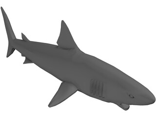 Shark Great White 3D Model