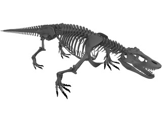 Komodo Dragon Skeleton 3D Model
