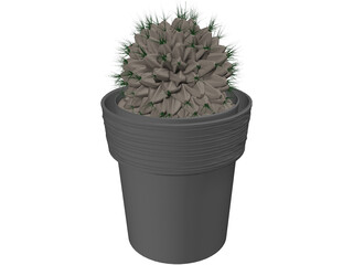 Potted Cactus Plant 3D Model