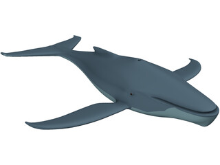 Whale Funny 3D Model
