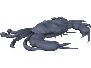 Harris Mud Crab 3D Model