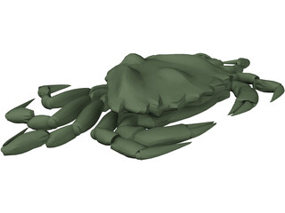 European Green Crab 3D Model