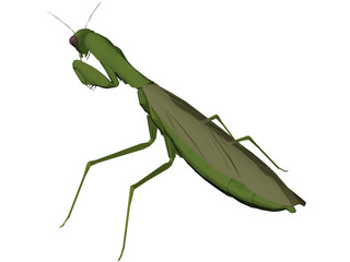 Flying Mantis 3D Model