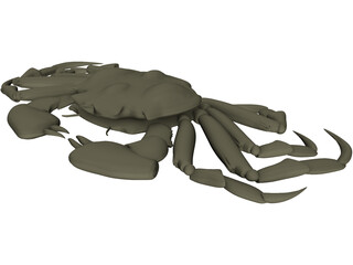Chinese Mitten Crab 3D Model