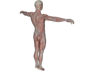 Human Body with Muscles 3D Model