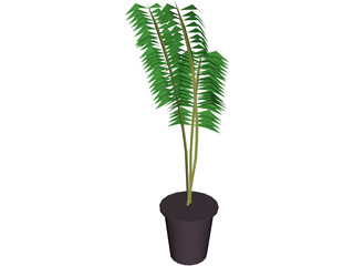 Potted Fern 3D Model