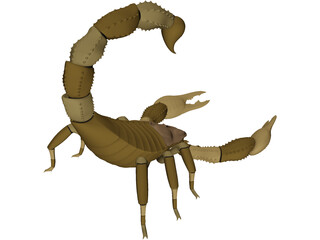 Scorpion - Buthidae Family - Hottentotta Species 3D Model
