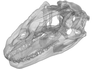 Allosaurus Fragilis Skull 3D Model