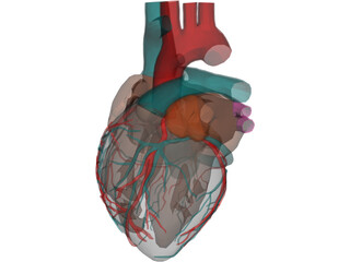 Heart with Internal Parts 3D Model