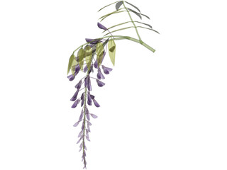 Wisteria Flower Japanese 3D Model