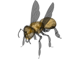Bee with Fur 3D Model
