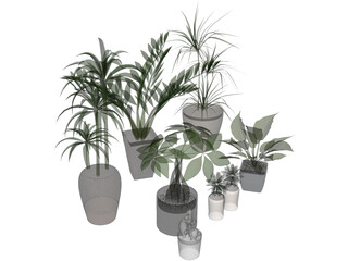 House Plant Collection 3D Model