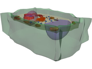 Plant Cell 3D Model