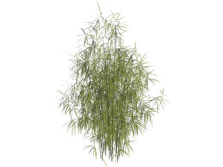 Bamboo Cluster Small 3D Model